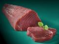 Frisches-Thunfischfilet-Sushi-Qualitaet-auf-tuerkis-Untergrund