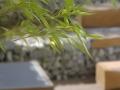Gartenfotografie-Gartenarchitektur-Innenhof-Atriumgestaltung