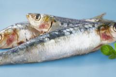 Foodfotografie frische Lebensmittel: Aufnahme von Sardinen vor blauem Hintergrund für eine Einzelhandelskette