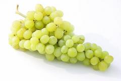 weintrauben_partnerland_italien_fruitlogistica