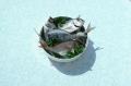 Foodfotografie Stilllife: Schüssel mit Frischfisch auf Ornamenttischdecke